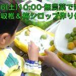 6/12 梅の収穫体験のお知らせ
