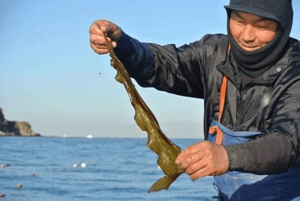 三浦半島の魅力を体験企画として提供しているシテコベから、まだまだ募集中の体験企画!